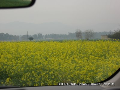 On the way through the village Yellow flowers of  'Sarson' (Mustard) are a symbol  of the village of Bhaer